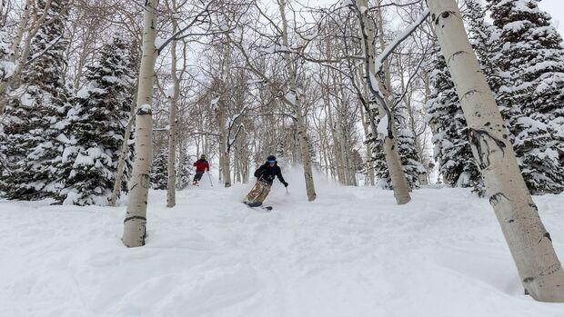 Ab durch die Bäume: Utah ist perfekt fürs Tree Skiing