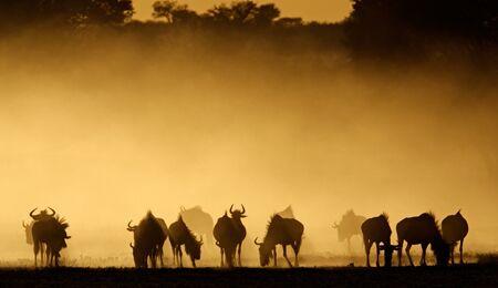 Abenteuerland Südafrika - Wüste, wilde Tiere und Fußball
