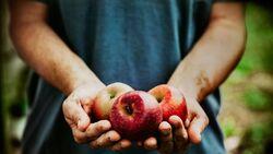 Äpfel schützen durch Ballaststoffe und Antioxidantien Ihr Herz