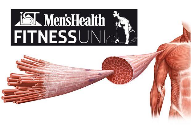 Baue ich mit Faszien-Training Muskeln auf?