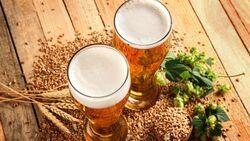 Bio-Bier im Vergleich
