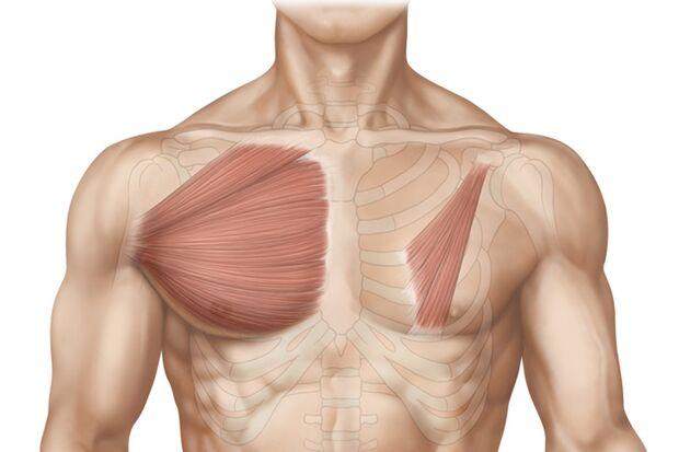 Das Workout für straffe Brustmuskeln