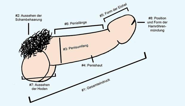 Das finden Frauen am Penis wirklich schön