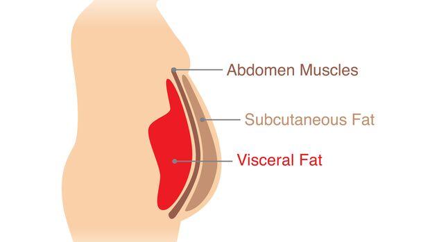 Das viszerale Fett befindet sich unter den Bauchmuskeln, das subkutane Fett sitzt direkt unter der Haut