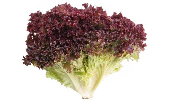 Der Lollo rosso ein Deko-Salat? Der Italiener kann noch viel mehr als nur gut aussehen
