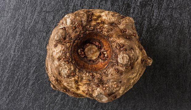 Der Stoff, aus dem die Shirataki-Pasta ist: Glucomannan