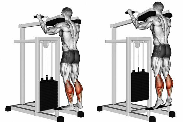 Der Zwillingswadenmuskel gibt der Wade (ihre typische) Form. Darunter liegt der Schollenmuskel, der nur an der Seite des Unterschenkels zu sehen ist.