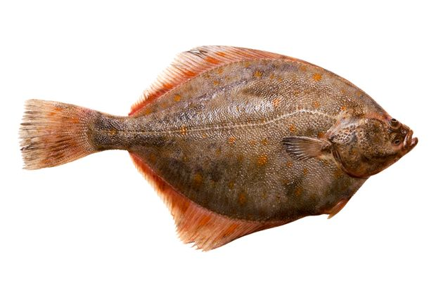 Der kalorienärmste Fisch: die Scholle