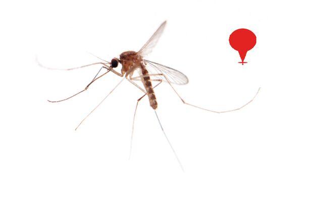 Die Aedes-Mücke ist bei Tag und bei Nacht aktiv