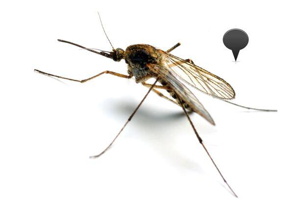 Die Anopheles-Mücke ist weltweit verbreitet