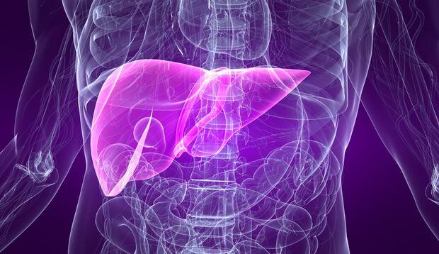 Die Kombination macht's: Blut-, Blutzucker, und Leberwerte, sowie der Fatty-Liver-Index können eine Fettleber diagnostizieren.