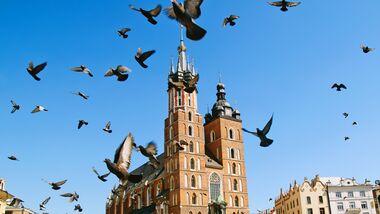 Die Krakauer Marienkirche