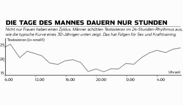 Die Testosteronkurve bei Männern.