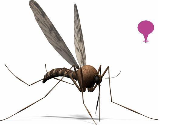 Die Tsetse-Fliege lebt nur in Afrika