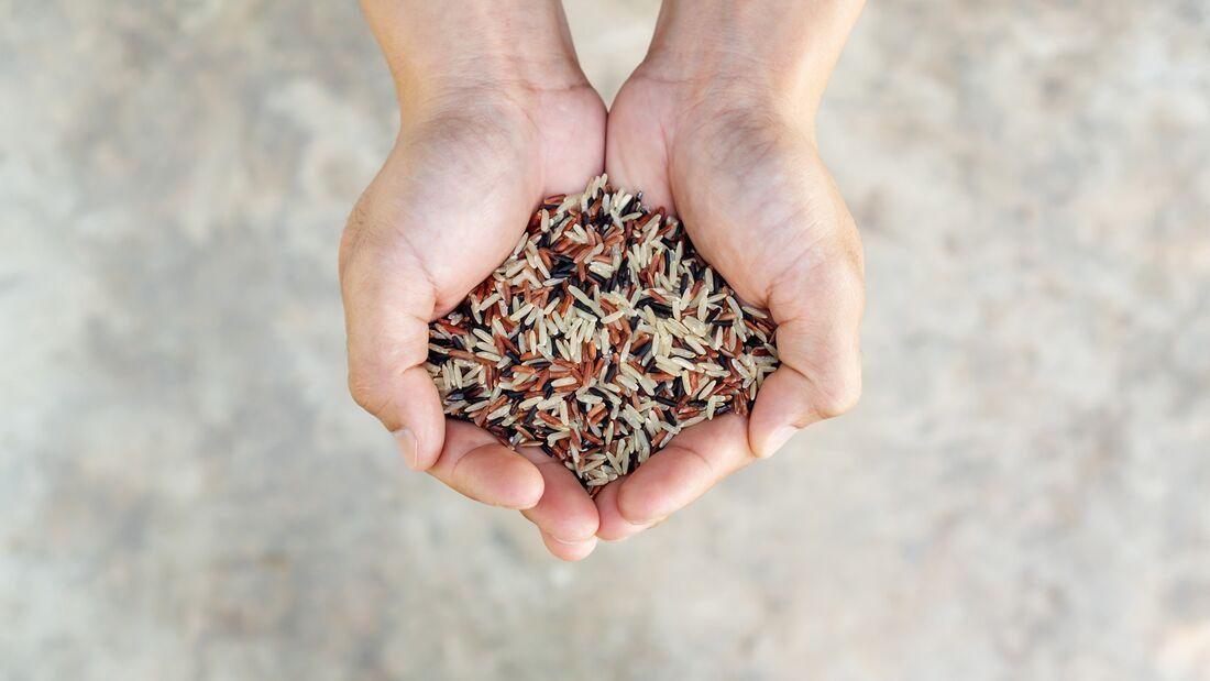 Die beste Wahl bei Reis