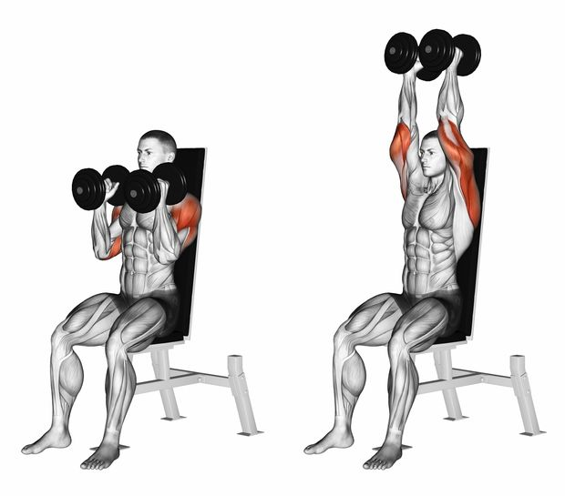 Dumbbell,Seated,Shoulder,Press,Parallel,Grip.,3d,Illustration