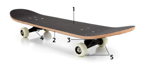 Ein Skateboard besteht aus Griptape, Deck, Shockpad, Achse und Rollen