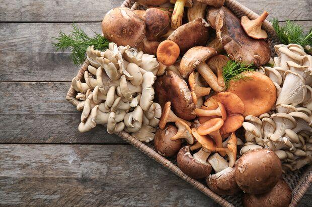 Es gibt über 100.000 Pilzsorten