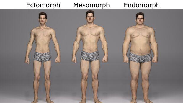 Es gibt verschiedene Körper-Typen: endomorph, ectomorph und mesomorph