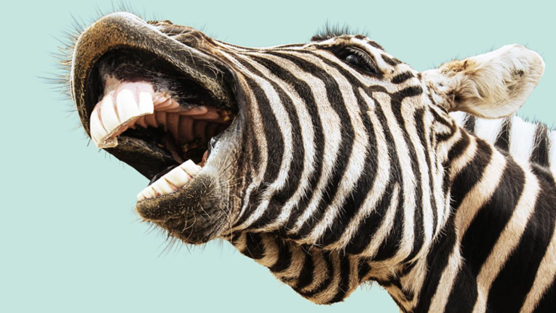 Exotisches Fleisch: Zebra & Co. richtig grillen