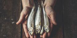 Fischölkapseln brauchen Sie nicht schlucken, essen Sie lieber fettreichen Fisch