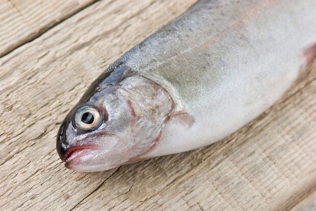 Forellen enthalten Vitamin B12