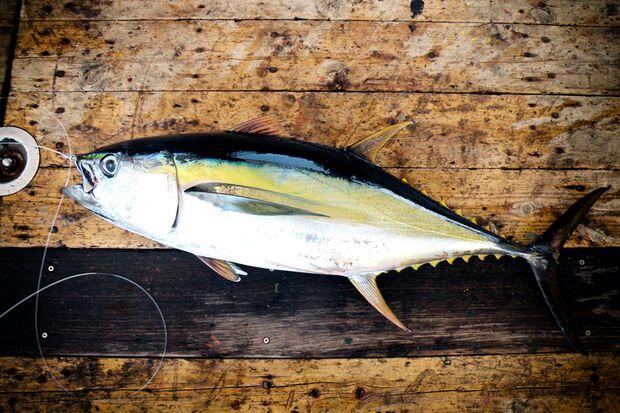 Gesamtsieger des Rankings: der Thunfisch