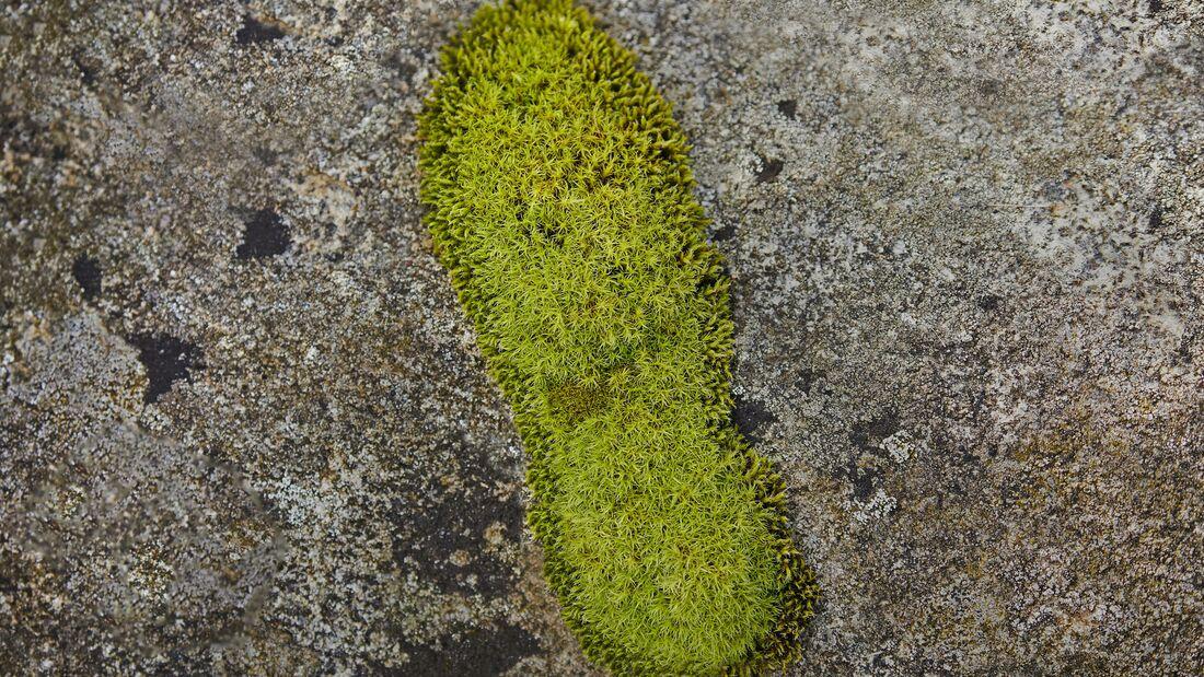 Grüner Fußabdruck
