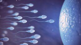 Gute Spermien Qualität hängt auch von der Ernährung ab