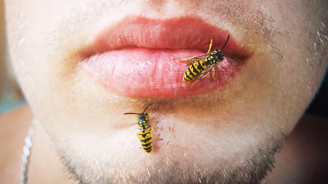 Keine Panik! So vermeiden Sie Wespenstiche