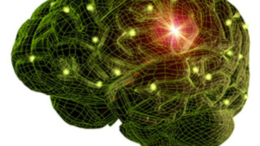 Komplexes Organ: das Gehirn