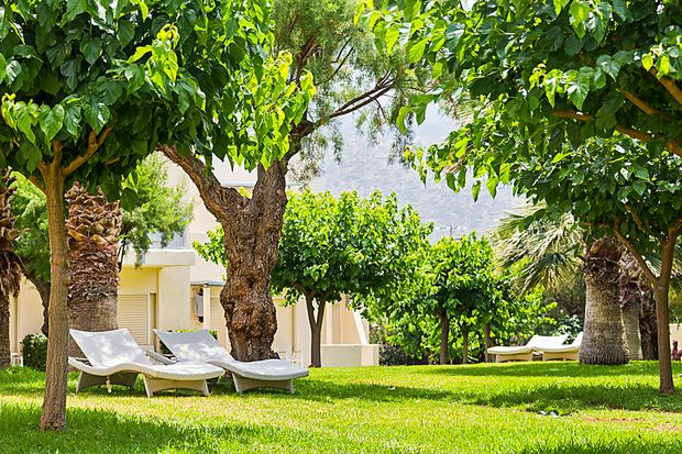 Luxus Ressort Bäume