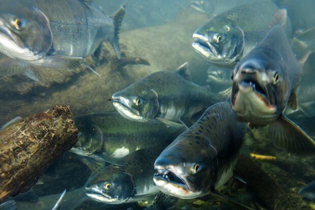 """Men's Health auf der """"Spur der Lachse"""""""