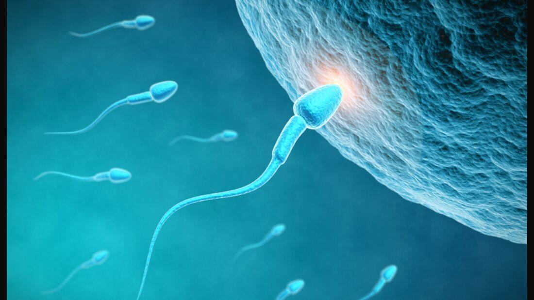 Moderater Ausdauersport fördert die Mobilität der Spermien