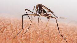 Mücken, Zecken & Co.: Tipps für Insektenschutz und Impfungen