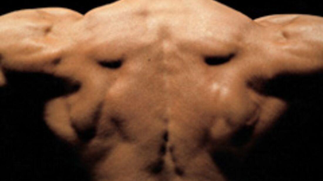 Muskel-Ziele: Breites Kreuz, schmale Taille