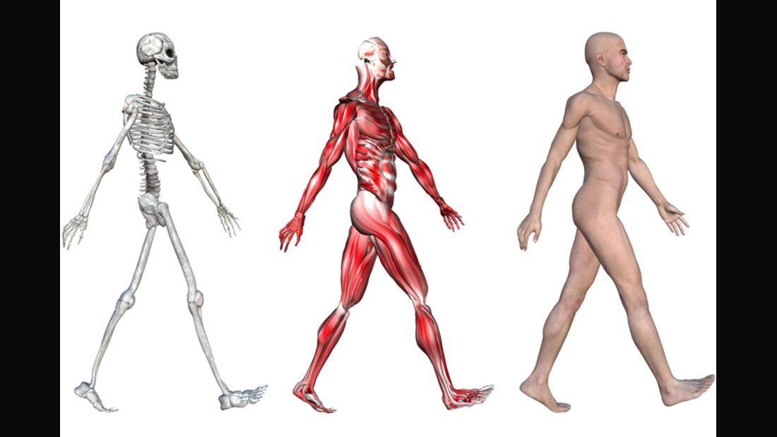 Muskelmasse schützt Ihre Knochen