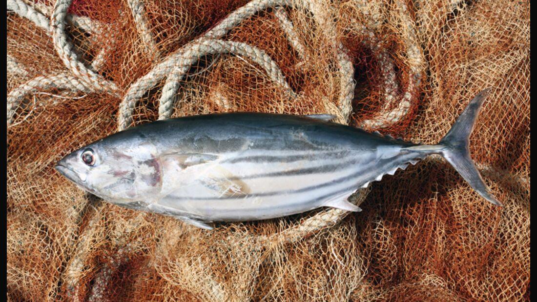 Nicht jeder Fisch gehört auf den Tisch beziehungsweise ins Netz