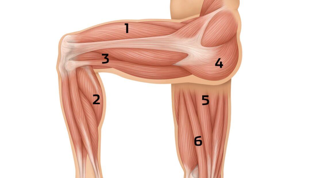 Prüfen Sie den Zustand Ihrer Beinmuskeln mit unseren 3 Fitness-Checks