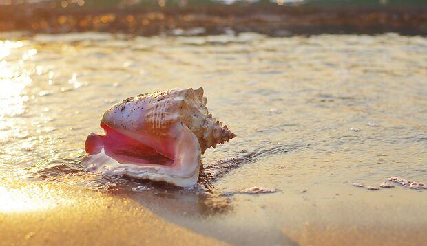 Riesenmuscheln dürfen Sie nicht aus dem Urlaub mitbringen