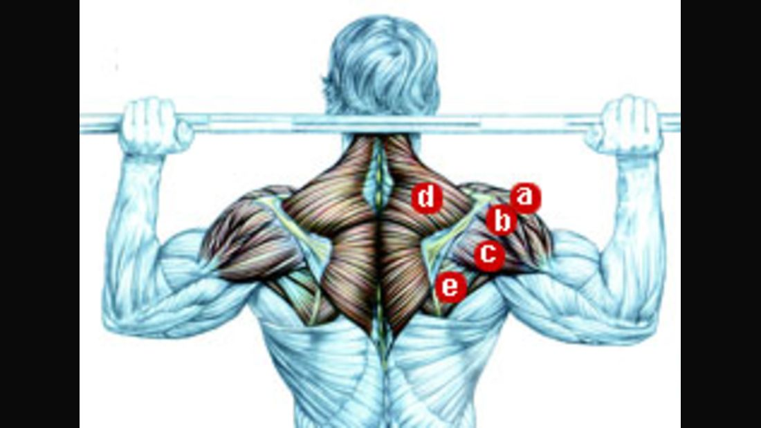 Schultermuskulatur