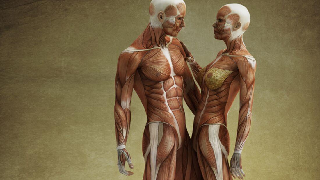 Sexmuskel richtig trainieren?