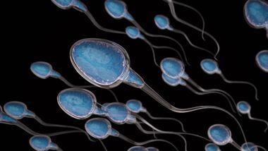 Spermien in 3-D Illustration