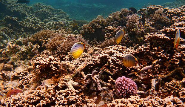 Tauchen vor Mauritius: Die Wassertemperaturen liegen das ganze Jahr zwischen angenehmen 20-30 Grad