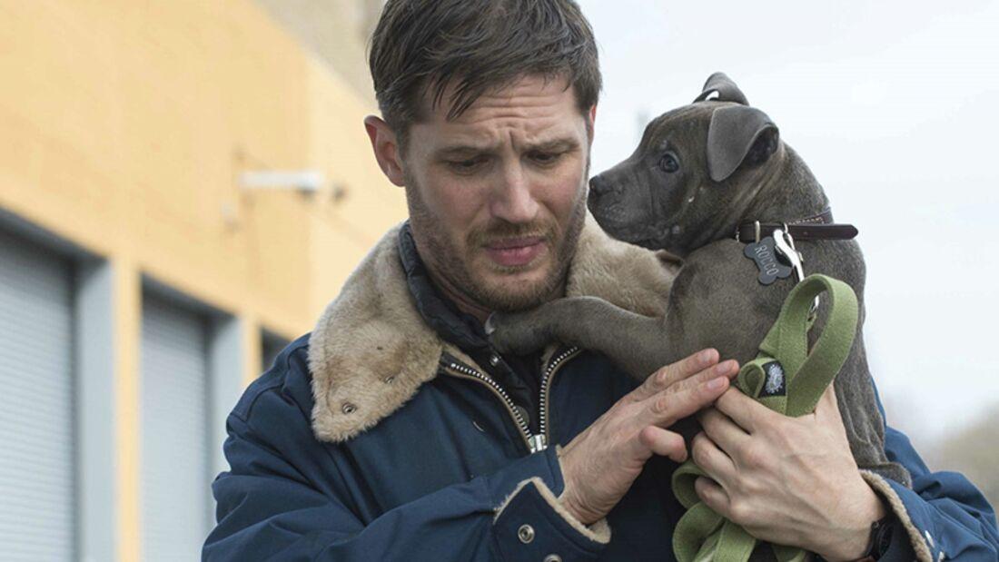 """Tom Hardy in """"The Drop"""": Ein schüchterner Barkeeper kümmert sich um Hundewelpen und versucht der Mafia aus dem Weg zu gehen"""