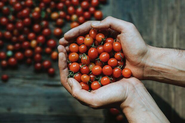 Tomaten enthalten Lycopin, das den Cholesterinwert sinkt