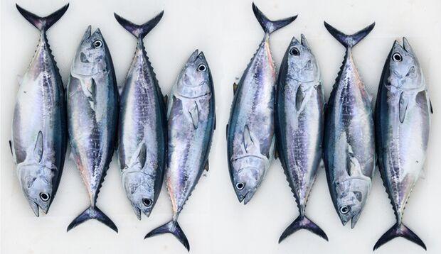 Tunfisch enthält besonders viel Protein