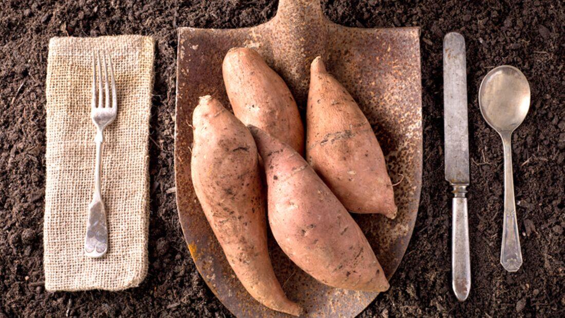 Unsere 20 besten Süßkartoffel-Rezepte