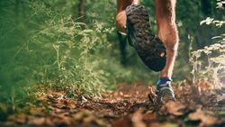 Wegen der Zeckengefahr sollte man im Wald nicht mit freien Beinen laufen