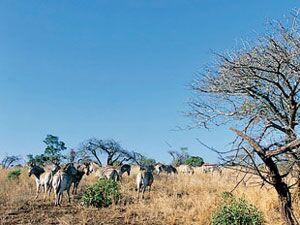 Zebras ganz privat